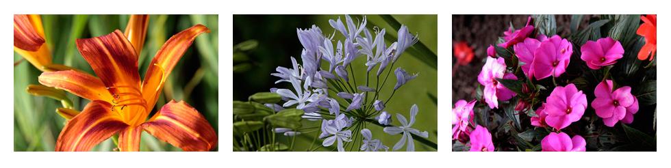 b_flowers